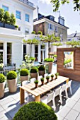 MODERN ROOF GARDEN BY STEPHEN WOODHAMS, LONDON: CEDARWOOD SCREEN, MIRROR, TABLE, CHAIRS, CLIPPED, TOPIARY, PLEACHED, MULBERRY, CONTEMPORARY, BOX BALLS IN CERAMIC CONTAINERS, CORNUS KOUSA, TERRACE, BALCONY, DECKING, DECKED, DECKS