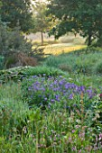 MOORS MEADOW GARDEN AND NURSERY  HEREFORDSHIRE: DAWN - IRIS SIBIRICA AND THE WILDFLOWER LYCHNIS FLOS - CUCULI - RAGGED ROBIN