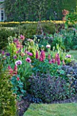 NARBOROUGH HALL GARDENS  NORFOLK: THE PLUM AND CHOCOLATE BORDER WITH LUPINS  POPPIES AND SAGE