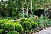 SANDHILL FARM HOUSE  HAMPSHIRE - DESIGNER ROSEMARY ALEXANDER: THE FRONT GARDEN - CLOUD HEDGING AND BIRCH TREES