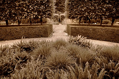 RHS_GARDEN__ROSEMOOR__DEVON_BLACK_AND_WHITE_TONED_IMAGE_OF_THE_FOLIAGE_GARDEN