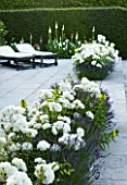 PRIVATE GARDEN, COTSWOLDS: DESIGNER ALISON HENRY - SWIMMING POOL, TERRACE / PATIO - ROSE WINCHESTER CATHEDRAL, LAVENDER HIDCOTE.  FORMAL, WATER, CLASSIC,  ENGLISH,  GARDEN, SEATS