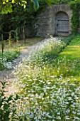 DESIGNER ALISON HENRY - PRIVATE GARDEN, COTSWOLDS: MEADOW WITH OXE EYE DAISIES AND PATH TO DOORWAY AND WOODEN DOOR. CLASSIC, ENGLISH, GARDEN