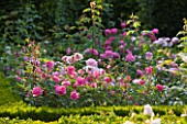 DESIGNER ALISON HENRY - PRIVATE GARDEN, COTSWOLDS: BOX EDGED BEDS WITH ROSES - ROSE GARDEN,  ENGLISH GARDEN, CLASSIC, COUNTRY
