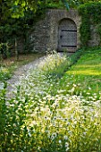 DESIGNER ALISON HENRY - PRIVATE GARDEN, COTSWOLDS: MEADOW WITH OXE EYE DAISIES, PATH AND WOODEN DOOR IN WALL -  ENGLISH GARDEN, CLASSIC, COUNTRY