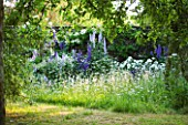 DESIGNER ALISON HENRY - PRIVATE GARDEN, COTSWOLDS: MEADOW WITH OXE EYE DAISIES, ROSES AND DELPHINIUMS -  ENGLISH GARDEN, CLASSIC, COUNTRY