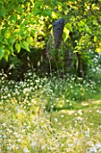 DESIGNER ALISON HENRY - PRIVATE GARDEN, COTSWOLDS: MEADOW WITH OXE EYE DAISIES AND METAL MASK WIND SCULPTURE -  ENGLISH GARDEN, CLASSIC, COUNTRY