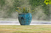 PRIVATE GARDEN, COTSWOLDS: DESIGNER ALISON HENRY - LAWN, SWIMMING POOL, BRONZE CONTAINER WITH CORDYLINE. FORMAL, WATER, CLASSIC,  ENGLISH,  GARDEN