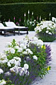 PRIVATE GARDEN, COTSWOLDS: DESIGNER ALISON HENRY - TERRACE / PATIO WITH SUN LOUNGERS, ROSE WINCHESTER CATHEDRAL AND LAVENDETR HIDCOTE. LIMESTONE PAVING, SEAT, SEATS, BENCHES