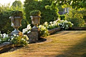 DESIGNER ALISON HENRY - PRIVATE GARDEN, COTSWOLDS: LAWN AND WALL WITH STONE URNS / CONTAINERS WITH HEBE - WHITE ICEBERG ROSES - ENGLISH GARDEN, CLASSIC, COUNTRY