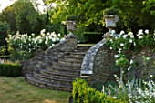 DESIGNER ALISON HENRY, PRIVATE GARDEN, COTSWOLDS - STONE STEPS WITH URNS, CONTAINERS, BOX EDGING AND ICEBERG ROSES - ORNAMANET, GARDEN, SUMMER, CLASSIC, ROSE, WHITE