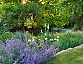 DESIGNER ALISON HENRY, PRIVATE GARDEN, COTSWOLDS - LAWN WITH BORDER OF NEPETA - COUNTRY, GARDEN, SUMMER, CLASSIC, ENGLISH. DAWN