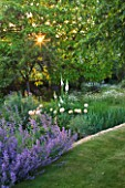 DESIGNER ALISON HENRY, PRIVATE GARDEN, COTSWOLDS - LAWN WITH BORDER OF NEPETA - COUNTRY, GARDEN, SUMMER, CLASSIC, ENGLISH