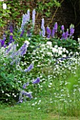 DESIGNER ALISON HENRY, PRIVATE GARDEN, COTSWOLDS - BORDER BESIDE LAWN IN BLUE AND WHITE WITH DELPHINIUMS AND ROSES - COUNTRY, GARDEN, SUMMER, CLASSIC, ENGLISH