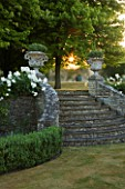 DESIGNER ALISON HENRY, PRIVATE GARDEN, COTSWOLDS - STONE STEPS WITH URNS, CONTAINERS, BOX EDGING AND ICEBERG ROSES - ORNAMANET, GARDEN, SUMMER, CLASSIC, ROSE, WHITE, DAWN, LIGHT