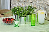 DESIGNER CLARE MATTHEWS: HOUSEPLANT - TABLE SETTING WITH GREEN GLASSES  BOWL OF FRUIT AND METAL CONTAINERS PLANTED WITH ISOTOMA AXILLARIS  IN CONSERVATORY