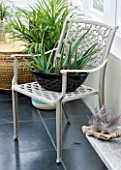 DESIGNER CLARE MATTHEWS: CONSERVATORY WITH BLACK METAL CONTAINER PLANTED WITH AN ALOE  ON METAL CHAIR