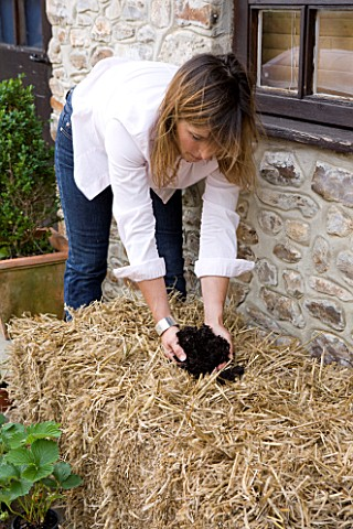 DESIGNER_CLARE_MATTHEWS__GROWING_STRAWBERRIES_AND_NASTURTIUMS_IN_A_STRAW_BALE_ADD_A_HANDFUL_OF_MULTI