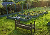 DESIGNER CLARE MATTHEWS: THE FRUIT AND VEGETABLE GARDEN IN DEVON. RAISED  BLUE PAINTED WOODEN BEDS PLANTED WITH NASTURTIUMS AND GOOSEBERRIES. WOODEN BENCH