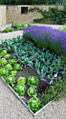 WHATLEY MANOR  WILTSHIRE: THE POTAGER/ VEGETABLE GARDEN WITH LETTUCES  KOHLRABI AND LAVENDER