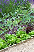 WHATLEY MANOR  WILTSHIRE: THE VEGETABLE GARDEN/ POTAGER WITH LETTUCES AND KOHLRABI