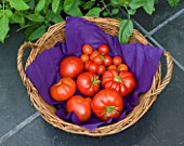 DESIGNER CLARE MATTHEWS: FRESHLY PICKED TOMATOES FROM THE CONSERVATORY  IN A BASKET