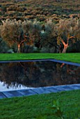 ARGENTARIO GARDEN  ITALY - DESIGNER: PAOLO PEJRONE  - BLACK SWIMMING POOL WITH OLIVES