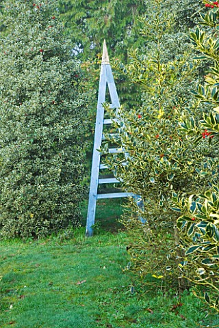 HIGHFIELD_HOLLIES__HAMPSHIRE__BLUE_WOODEN_TRIPOD_AND_HOLLIES__ILEX_ALTACLERENSIS_BELGICA_AUREA_IN_FO