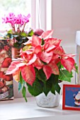 DESIGNER: JACKY HOBBS  LONDON: PINK AND WHITE THEMED GIRLS BEDROOM - POINSETTIA IN CONTAINER AT CHRISTMAS