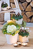 DESIGNER: JACKY HOBBS  LONDON: STEP LADDER WITH CANDLE  WHITE CYCLAMEN AND CABBAGE IN WHITE CONTAINERS. HOUSEPLANTS