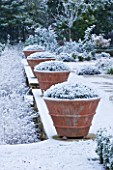 FORMAL TOWN GARDEN IN SNOW  OXFORD  WINTER: DESIGN BY LIZ NICHOLSON - TERRACE WITH ITALIAN TERRACOTTA CONTAINERS PLANTED WITH LAVANDULA AUGUSTIFOLIA HIDCOTE