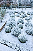 FORMAL TOWN GARDEN IN SNOW  OXFORD  WINTER: DESIGN BY LIZ NICHOLSON - BALLS OF LAVENDER - LAVANDULA X INTERMEDIA GROSSO