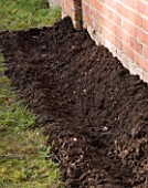 DESIGNER: CLARE MATTHEWS: PLANTING A BAREROOT RASPBERRY CANE FRUIT BUSH - PREPARING SOIL BED BY DIGGING A TRENCH