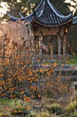 RHS GARDEN WISLEY  SURREY:  EVENING VIEW ACROSS THE LAKE AT SEVEN ACRES TO THE CHINESE PAGODA WITH HAMAMELIS APHRODITE AND CAREX ASHIMENSIS EVERGOLD. WINTER