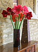 GLASS CONTAINER WITH CUT FLOWERS OF AMARYLLIS - AMARYLLIS HIPPEASTRUM DESIRE   FERRARI AND BENFICA