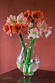 DINING ROOM WITH CUT FLOWER VASE FILLED WITH AMARYLLIS - AMARYLLIS HIPPEASTRUM DESIRE AND DARLING - STYLING BY JACKY HOBBS