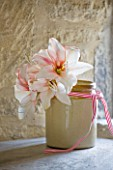 GLAZED JAR WITH WITH AMARYLLIS - AMARYLLIS HIPPEASTRUM TEMPTATION - STYLING BY JACKY HOBBS