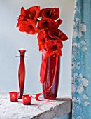 RED CONTAINER WITH AMARYLLIS IN BLUE BEDROOM - AMARYLLIS HIPPEASTRUM - RED LION - STYLING BY JACKY HOBBS