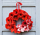 WREATH ON GREY DOOR MADE WITH AMARYLLIS HIPPEASTRUM CHARISMA   RED LION AND BENFICA - STYLING BY JACKY HOBBS