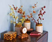 HAMAMELIS ANNE  COOMBE WOOD  JAPONICA VAR MEGALOPHYLLA  ANGELLY  APHRODITE  GINGERBREAD  GLOWING EMBERS  RUBIN  FOXY LADY  MAGIC FIRE  IN STONE JARS ON TABLE