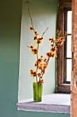HAMAMELIS APHRODITE  GINGERBREAD AND GLOWING EMBERS IN GREEN VASE ON WINDOWSILL