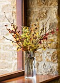 HAMAMELIS ANNE  COOMBE WOOD  JAPONICA VAR MEGALOPHYLLA  ANGELLY  APHRODITE  GINGERBREAD  GLOWING EMBERS  RUBIN  FOXY LADY  MAGIC FIRE  IN GLASS VASE ON WINDOWSILL