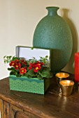 DESIGNER CLARE MATTHEWS - HOUSEPLANT PROJECT - RECYCLED GREEN LINED GIFT BOX CONTAINER PLANTED WITH PRIMULAS