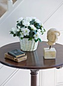 DESIGNER CLARE MATTHEWS - HOUSEPLANT PROJECT - WHITE AZALEA IN A WICKER CONTAINER ON A TABLE IN HALLWAY