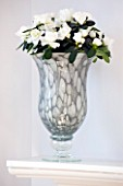 DESIGNER CLARE MATTHEWS - HOUSEPLANT PROJECT - GREY SILVER CONTAINER PLANTED WITH A WHITE AZALEA