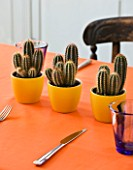 DESIGNER CLARE MATTHEWS - HOUSEPLANT PROJECT - TABLE WITH ORANGE TABLECLOTH AND YELLOW CONTAINERS PLANTED WITH CACTI