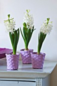 DESIGNER CLARE MATTHEWS - HOUSEPLANT PROJECT - PURPLE WOVEN BASKET CONTAINERS PLANTED WITH WHITE HYACINTHS