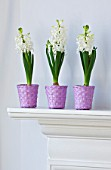 DESIGNER CLARE MATTHEWS - HOUSEPLANT PROJECT - PURPLE WOVEN BASKET CONTAINERS PLANTED WITH WHITE HYACINTHS ON MANTELPIECE