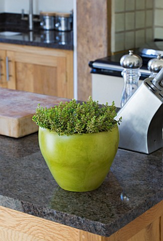 DESIGNER_CLARE_MATTHEWS__HOUSEPLANT_PROJECT__GREEN_CONTAINER_PLANTED_WITH_A_VARIEGATED_THYME__IN_KIT