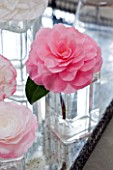 CAMELLIAS IN GLASS VASES - CAMELLIA DESIRE  - STYLING BY JACKY HOBBS